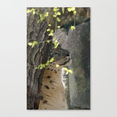 Restful snow panther Canvas Print