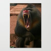 Baboon In Lake District … Canvas Print