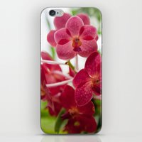 Pink Orchids iPhone & iPod Skin