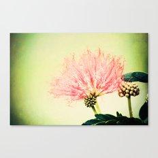 Fairy Floss Canvas Print
