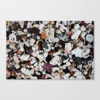 Shells like Sand  Canvas Print