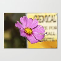 Canvas Print featuring Cosmo by Ornithology