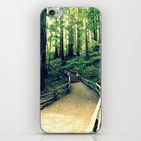 Muir Woods Path iPhone & iPod Skin