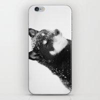 Shiba iPhone & iPod Skin