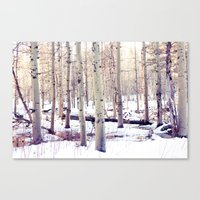 Aspen Trees in Winter Canvas Print