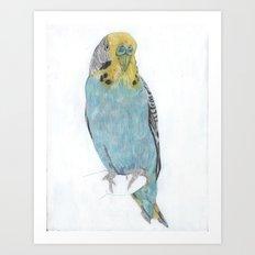 Budgie, commission Art Print