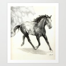 Appaloosa Stallion Art Print