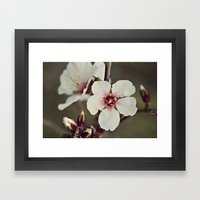 Almond Blossoms On A Bud… Framed Art Print