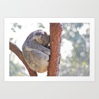 Sleeping In The Trees - … Art Print