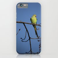 Alexandrine Parakeet iPhone 6 Slim Case