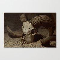 Ram Skull Canvas Print