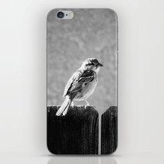 Sparrow BW iPhone & iPod Skin