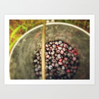 Berry Picking - Summer Blueberries Art Print
