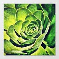 Oh So Succulent Canvas Print