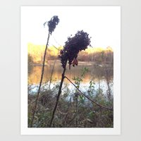 Plants by Royal Lake Art Print