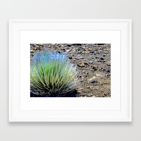 Haleakalā Silversword Framed Art Print