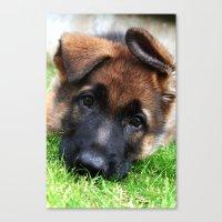 Playful Puppy. Canvas Print