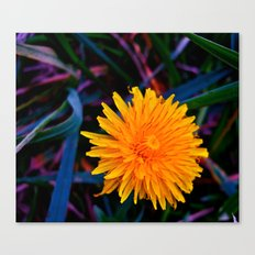 Dandelion of All Colors Canvas Print