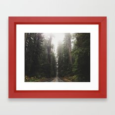 Redwoods in Prairie Creek Framed Art Print