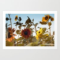 Red Sunflower... Art Print