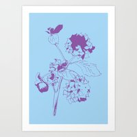 Hydranga - purple on blue Art Print