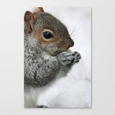 Snow Squirrel Canvas Print
