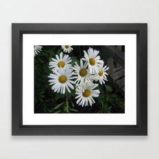 daisys 2 Framed Art Print