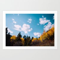 fern lake trails .  Art Print