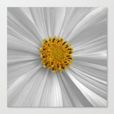 cosmos bloom I Canvas Print