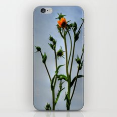 Compass Plant iPhone & iPod Skin