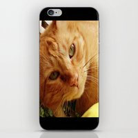 Chester iPhone & iPod Skin