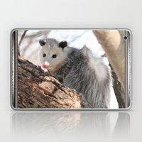 North American Opossum in Winter Laptop & iPad Skin