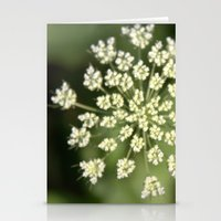 queen lace flowering head. floral garden plant photography. Stationery Cards