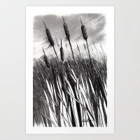 Cattail Field Art Print