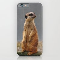 iPhone & iPod Case featuring Meerkat No.1 by SC Photography