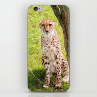 Hey Kitty iPhone & iPod Skin