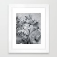Winter Hydrangea Framed Art Print