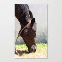 horse t Canvas Print