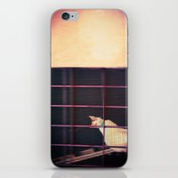 Kitty looking at me iPhone & iPod Skin