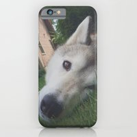 Husky 1 iPhone 6 Slim Case
