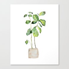 Fig tree watercolor  Canvas Print