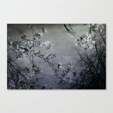 clouds of blossoms 1 Canvas Print