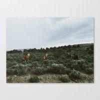 Nevada Horses Canvas Print