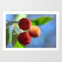 Strawberry Tree Fruits 8… Art Print