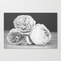 June Roses - Black & White Canvas Print