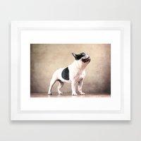 Frech bulldog Framed Art Print