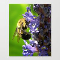 Bee All You Can Bee Canvas Print