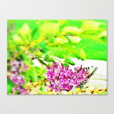 butterfly glory Canvas Print