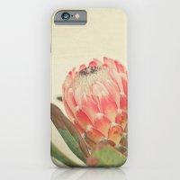 Pink Ice iPhone 6 Slim Case