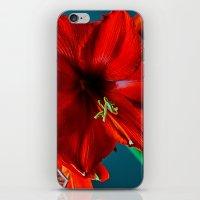 Amaryllis iPhone & iPod Skin